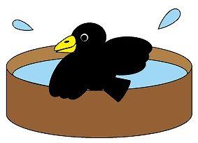 カラスの行水の意味・使い方・対義語~なぜ烏なの?